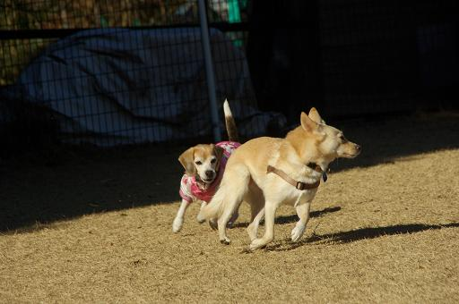 130104-24cookydog run01