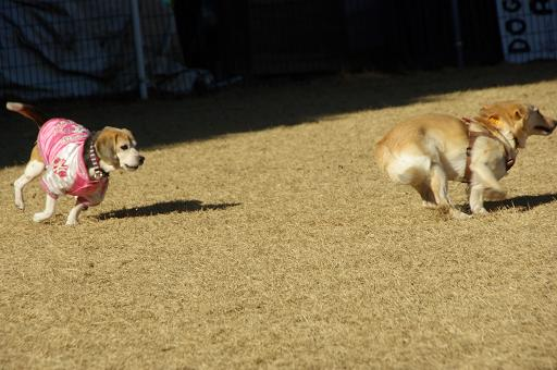 130104-25cookydog run02