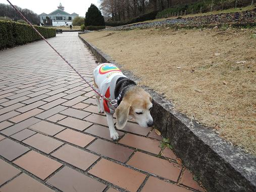 130105-08cooky walk02
