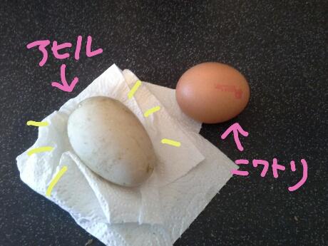 PicsArt_eggs.jpg