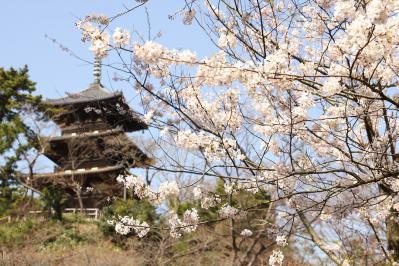 shuku-IMG_2492.jpg