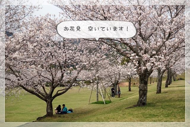 さくら桜04