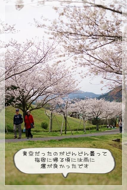 さくら桜07