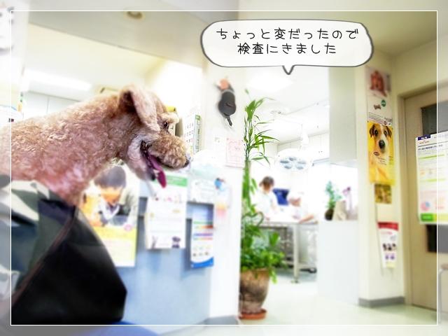 さくら桜08