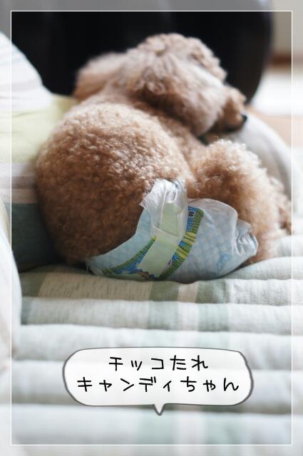 でぃー子06