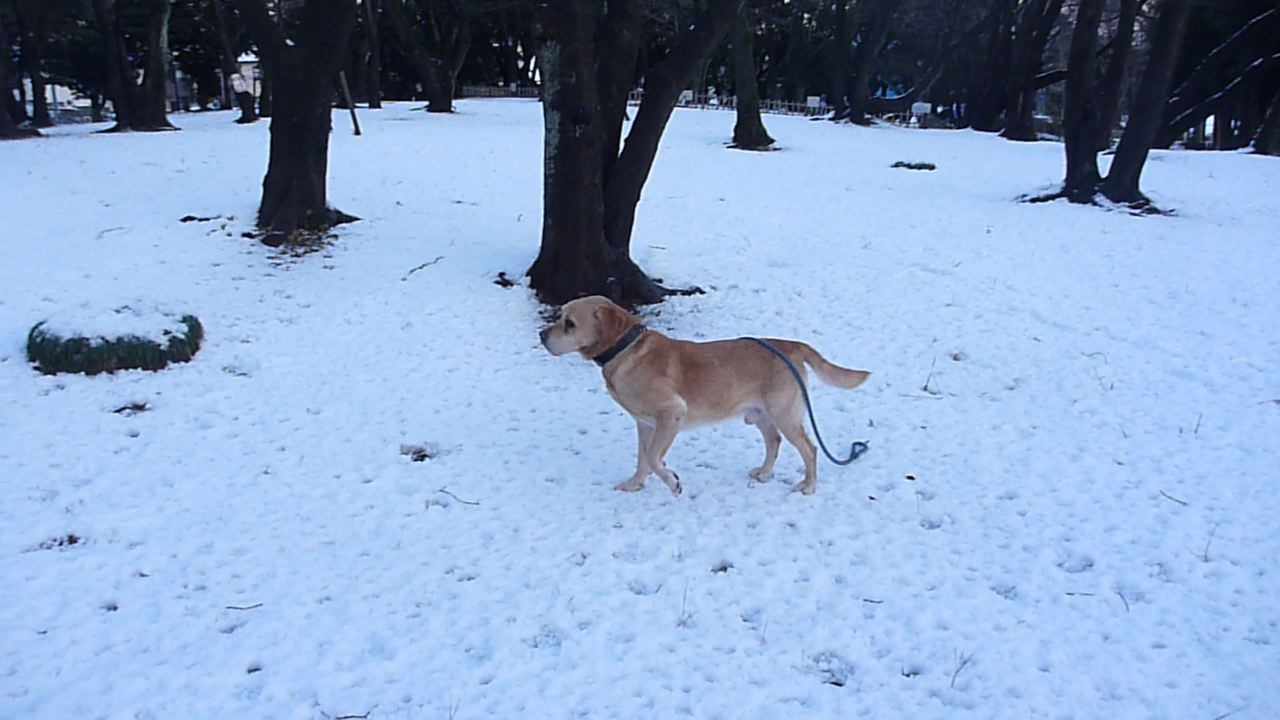 Snowman_5.jpg