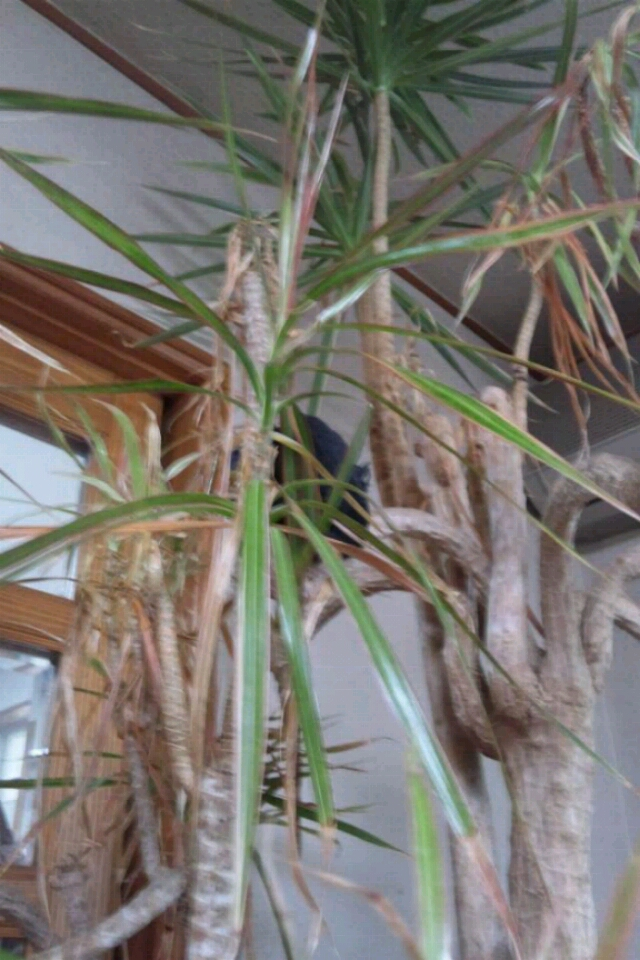 fc2blog_20120603085942422.jpg