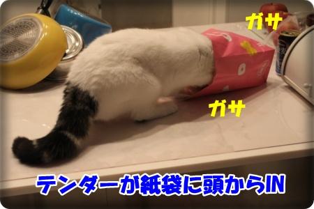0-001_20121120004815.jpg