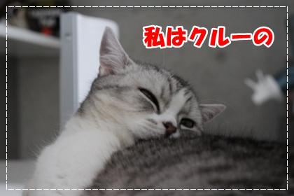 1-001_20120616180918.jpg