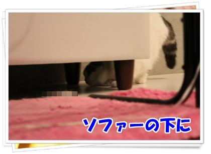 1-001_20120616183917.jpg