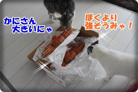 1-001_20121112214200.jpg