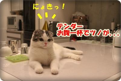 10-009_20120506155132.jpg