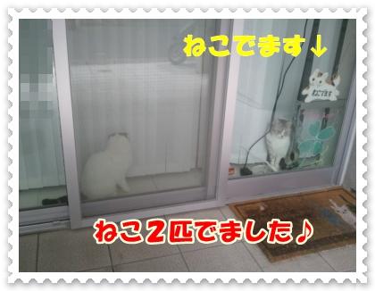 1_20120525014422.jpg
