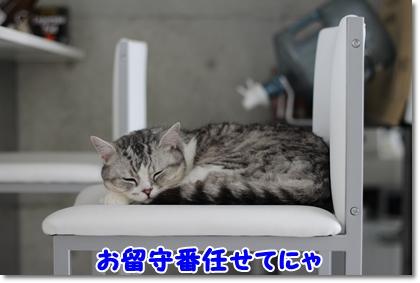 1_20120609010841.jpg