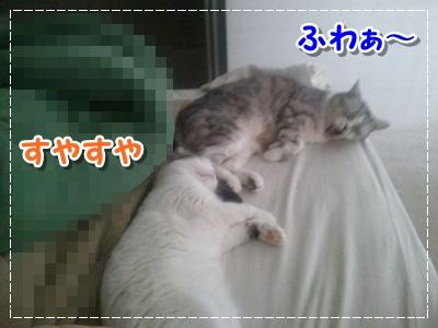 1_20120712194152.jpg