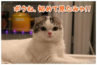 1_20120801204754.jpg