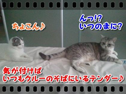 1_20120807215127.jpg