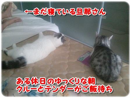 1_20121028232106.jpg