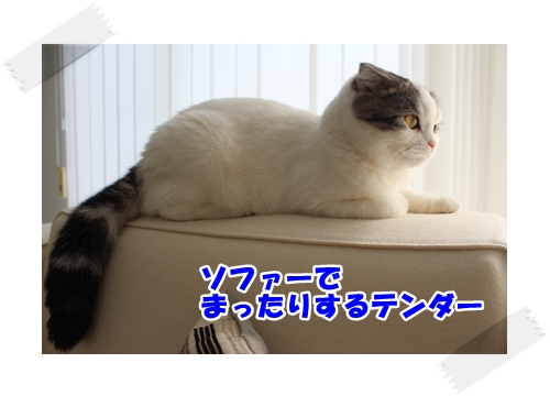 1_20121106233302.jpg