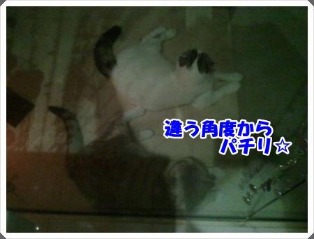 2-002_20121027013711.jpg