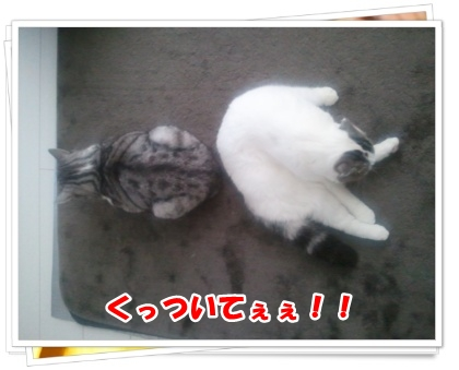 2-002_20121108232912.jpg