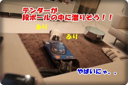 2-002_20121110005047.jpg