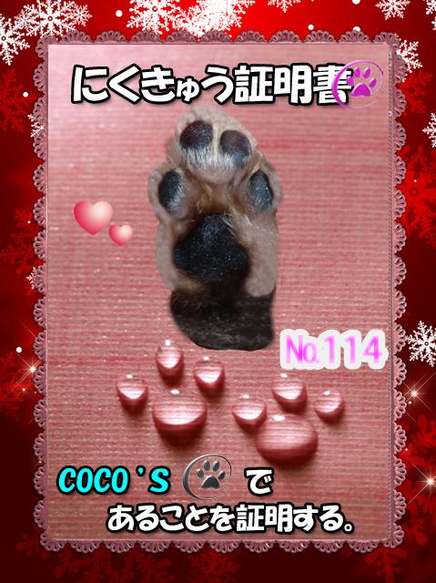 証明書(COCOちゃん)
