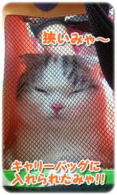 2012_07_14_10_39_47.jpg