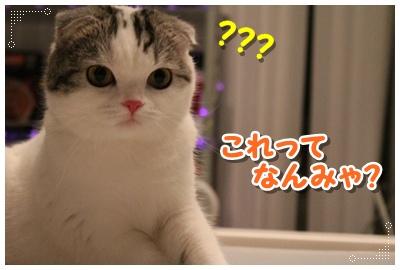 2_20120801204753.jpg