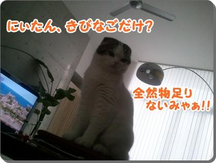 2_20120813225417.jpg