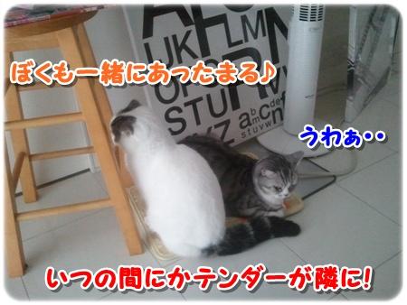 2_20121203011912.jpg