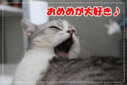 3-003_20120616180916.jpg