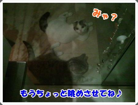 3-003_20121027013711.jpg