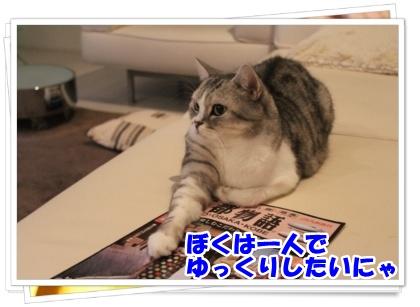 3-003_20121108232911.jpg