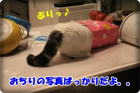 3-004_20121120004815.jpg