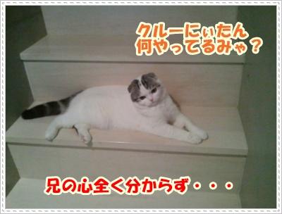 3_20120508004935.jpg