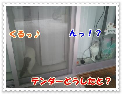3_20120525014420.jpg