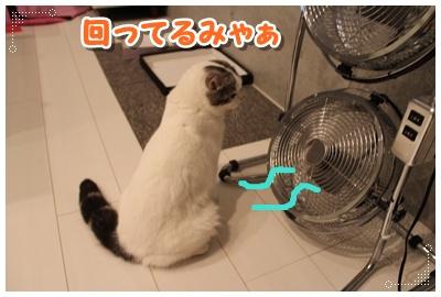 3_20120801204753.jpg