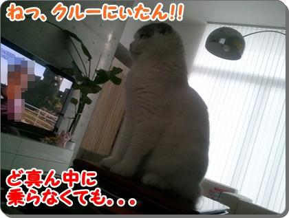 3_20120813225416.jpg