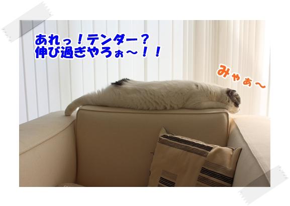 3_20121106233301.jpg