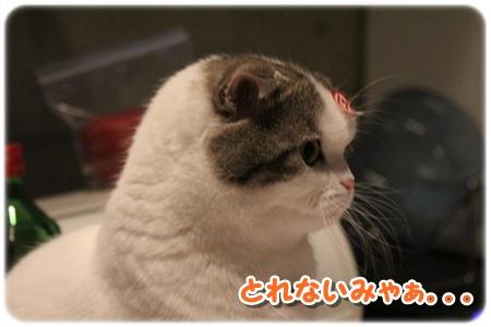 3_20121202025801.jpg