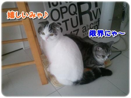 3_20121203011911.jpg
