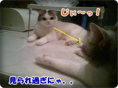 4-003_20120730204216.jpg