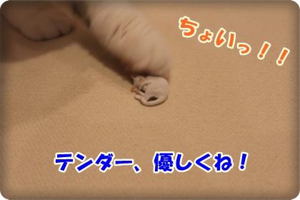 4-004_20120603003221.jpg