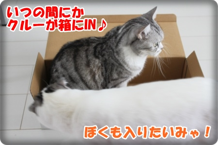 4-004_20121112214159.jpg