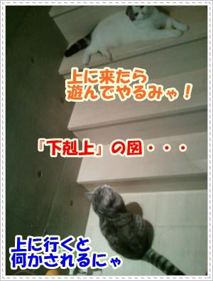 4_20120508004934.jpg