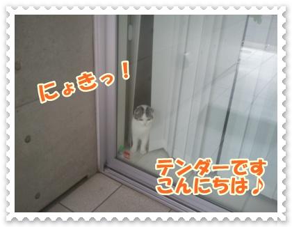 4_20120525014420.jpg