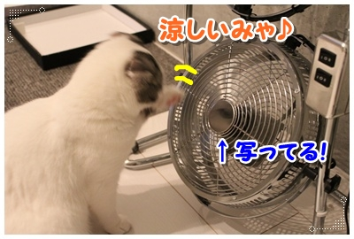 4_20120801204752.jpg