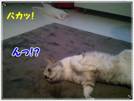 4_20120805171251.jpg