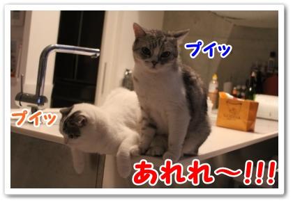 4_20121020000302.jpg